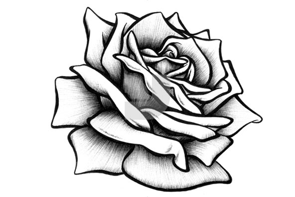 Hand Drawn Rose Collection